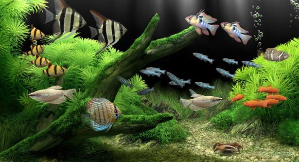 Fish Tank Bar