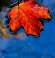 Autumn Bar Themes